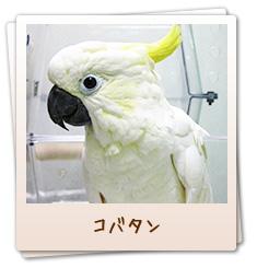 小鳥のセンター病院・コバタン