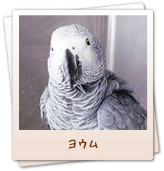小鳥のセンター病院・ヨウム