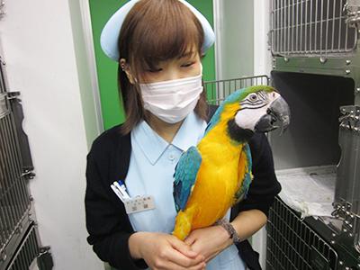 小鳥のセンター病院・病院案内