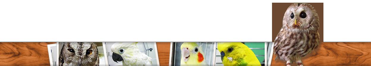 川口市の小鳥専門病院「小鳥のセンター病院」